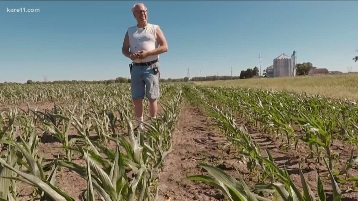 Minnesota crop farmers in desperate need of rain amid drought-like conditions