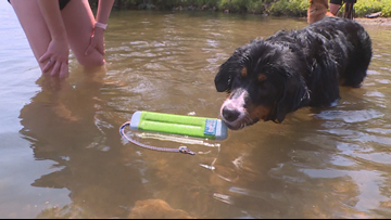 Bringing Up Barli: Barli learns to swim