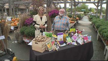 Grow with KARE: Tulips that come back!