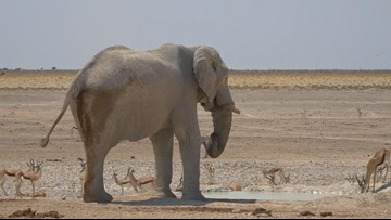 Explore with Sven: Predators on the prowl in Etosha National Park