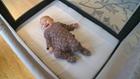 Edina entrepreneur's 'Linen & Leah' promotes safe sleep for babies