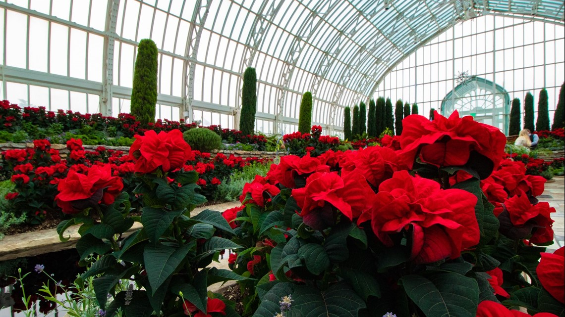 That's So Minnesota: Holiday Flower Show at Como's Conservatory