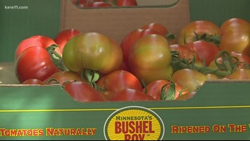 Grow with KARE: Bushel Boy Tomatoes