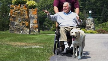 The bond between a service dog and their human