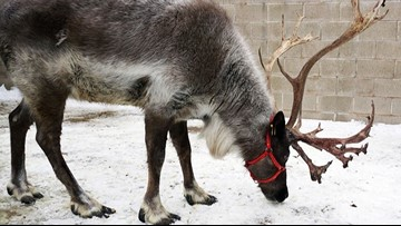 Minnesota Zoo offers holiday experiences