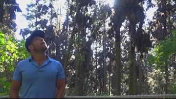 Sven Explains: Monarch conservation efforts