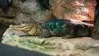 New 'Brave the Rainforest' exhibit coming to SEA LIFE Aquarium