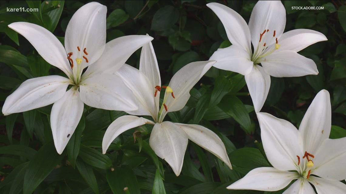 Grow with KARE: Plant a moon garden