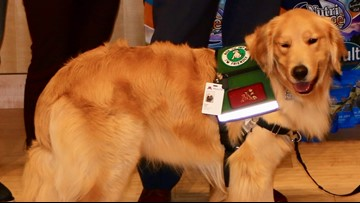 Rocket the golden retriever joins Masonic Children's Hospital staff