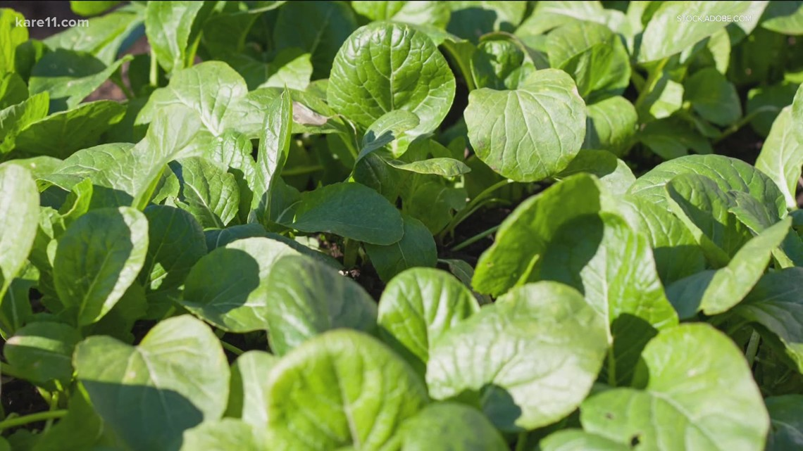 Grow with KARE: Veggies that grow in shade