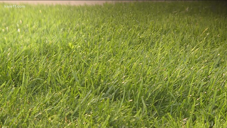 Grow with KARE: Lawn care after the hottest summer on record