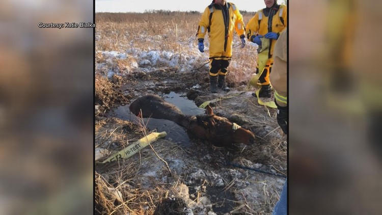 Horse stuck in swamp in Princeton