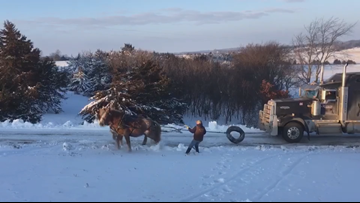 Stunning video shows horses pull semi up hill