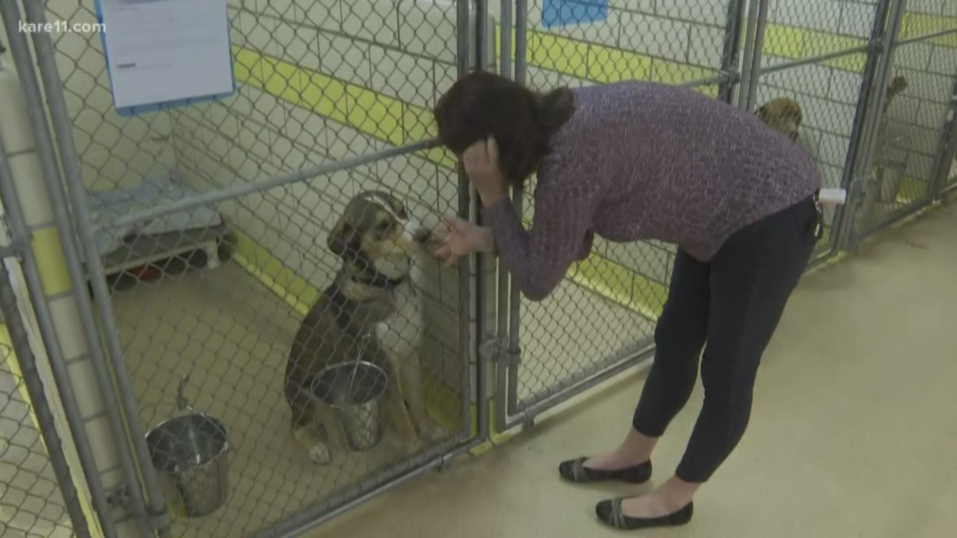 St Paul Animal Humane Society Closing Donations Needed Kare11 Com