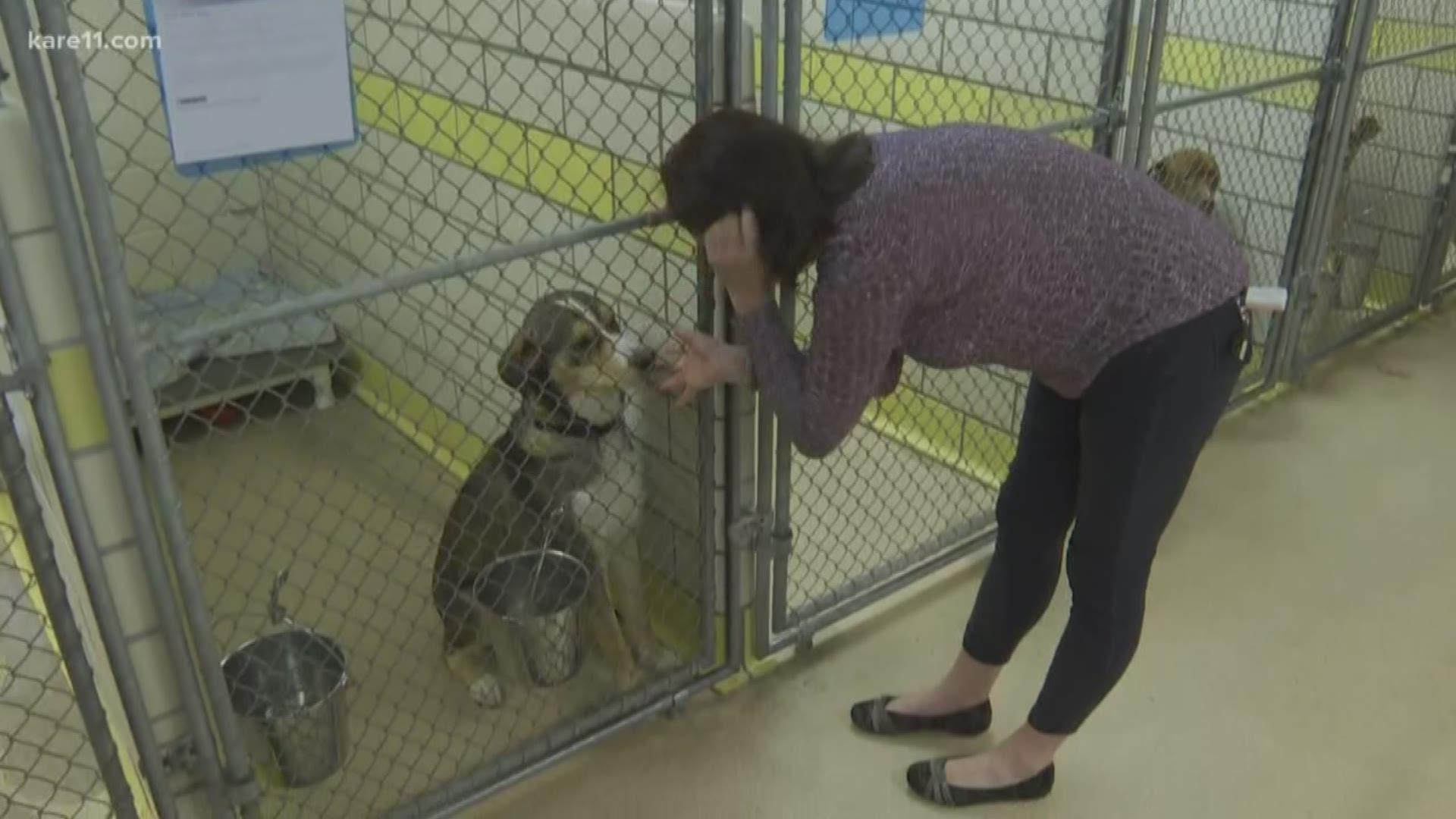 St Paul Animal Humane Society Closing Donations Needed Kare11 Com