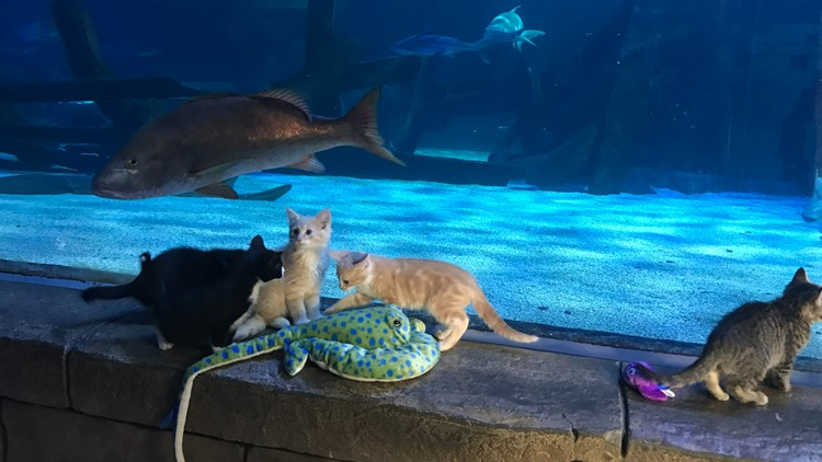 Kittens take over the SEA LIFE aquarium at Mall of America