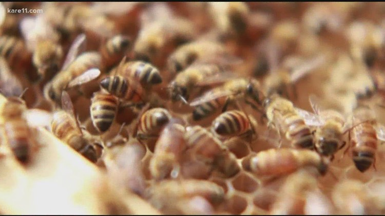 Bees living in the heart of Minneapolis