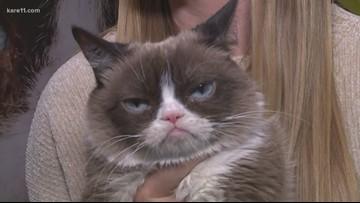 Grumpy cat visits Minnesota