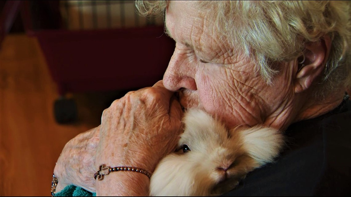 Seniors get bunny hugs, thanks to a soft-hearted teenager with a plan