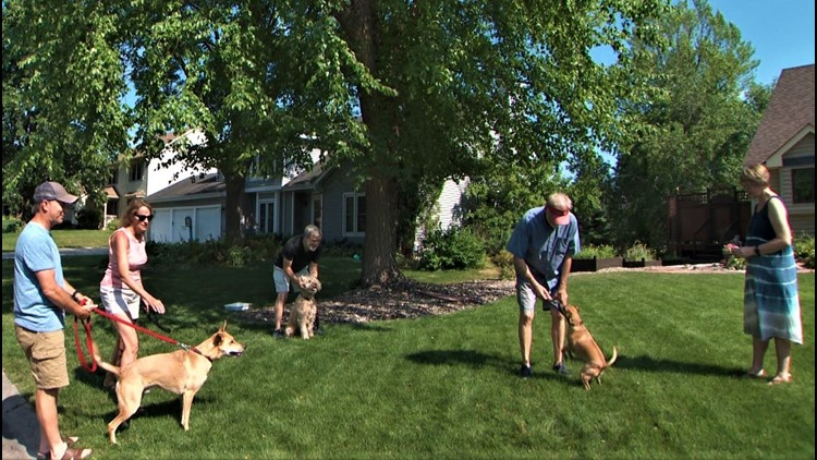 Twin Cities lawn becomes hound central station, as dogs pull their humans to their favorite destination