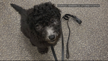 Hennepin Co. Attorney's Office welcomes new support animal