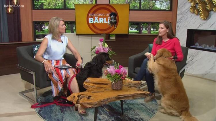 Bringing up Barli: Learning how to heel