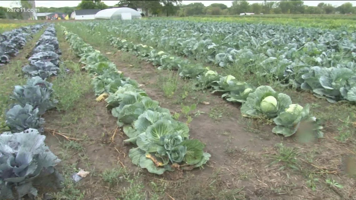 Walz unveils $10 million relief package for farmers, producers hit by drought