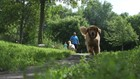 Dog park etiquette 101: How people and pets should behave