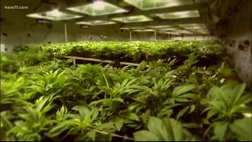 Minnesotans' opinions on recreational marijuana