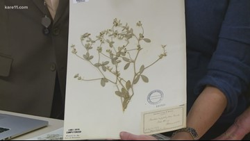 Grow with KARE: Treasure trove discovery at Bell Museum