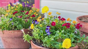 Grow with KARE: Gardening in a wet spring