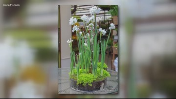 Grow with KARE: Paperwhites and Amaryllis