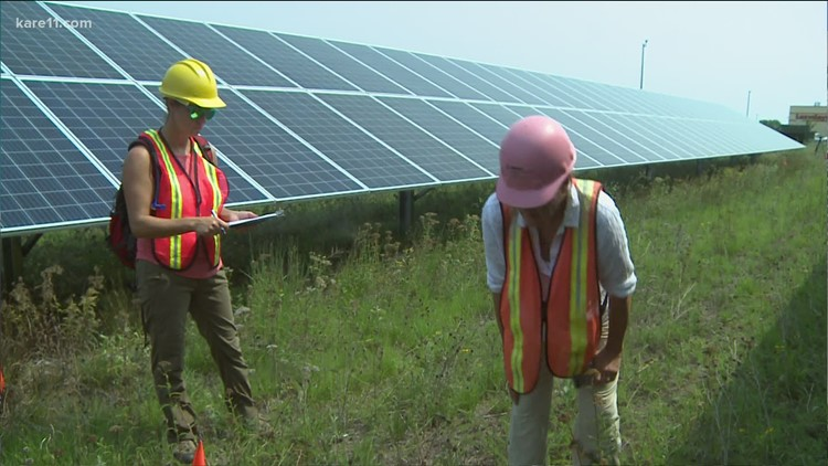 Study seeks best way to utilize land underneath solar panels to help local farmers