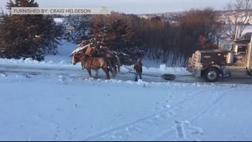 Belgian horses pull semi up icy hill