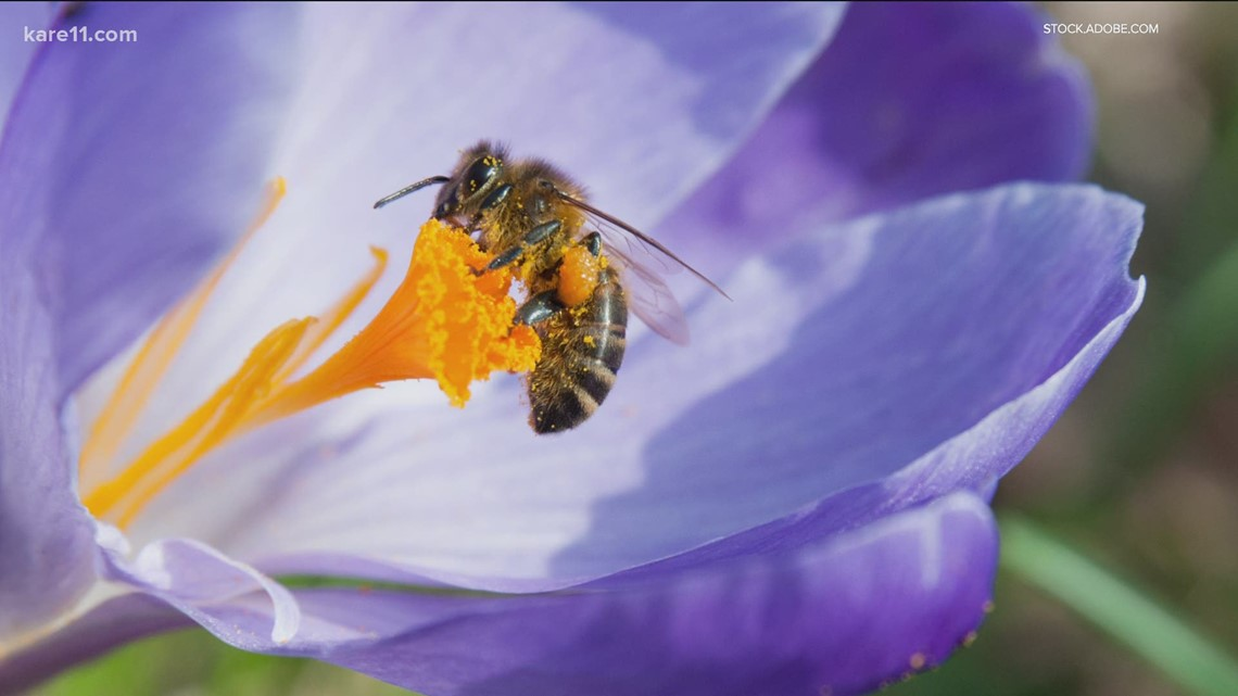 Grow with KARE: How a flower's shape attracts different pollinators