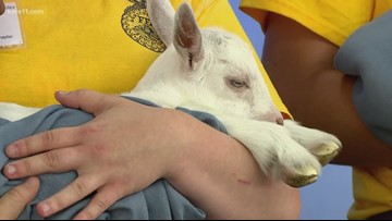 Baby animals at the Minnesota State Fair!