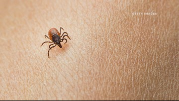 Deer tick levels remain elevated in Minnesota