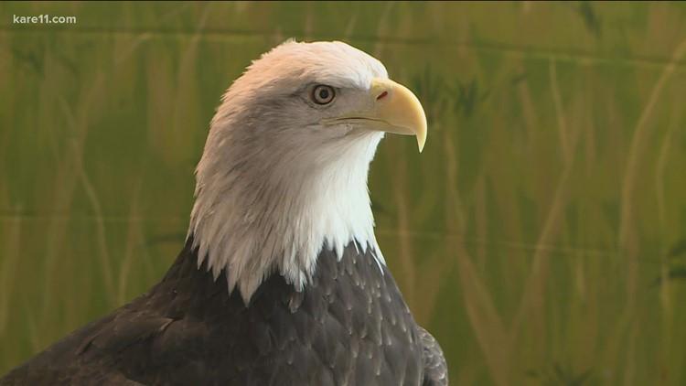 National Eagle Center in Wabasha prepares for $27M expansion
