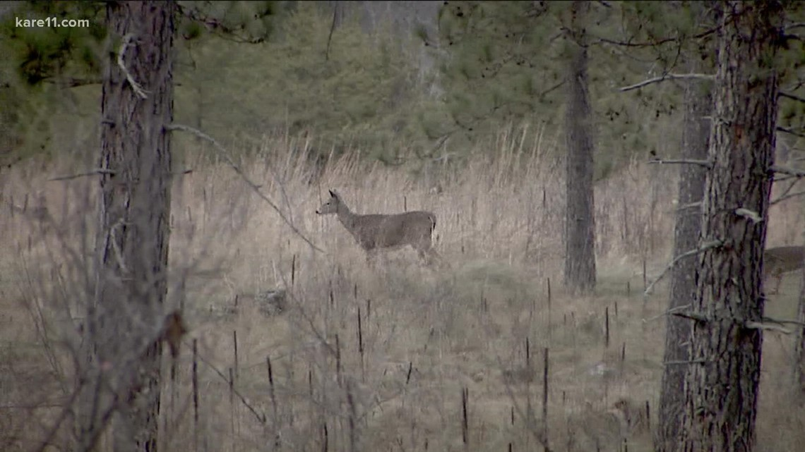 Managing Chronic Wasting Disease in farmed and wild deer population