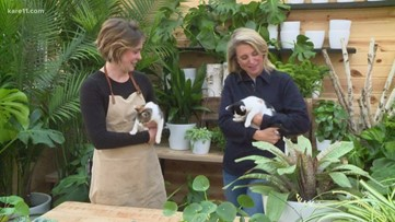 Grow with KARE: Pet-friendly plants
