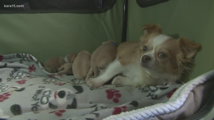 After every puppy in her litter died, dog 'adopts' orphan puppies