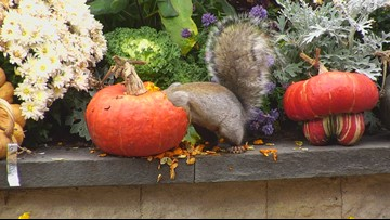 KARE 11 backyard squirrels