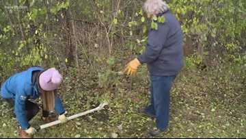 Grow with Kare: Be a citizen scientist and fight buckthorn!