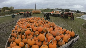 Outdoor pumpkin, apple sales drop after fall snow