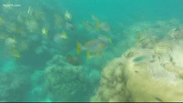 Explore with Sven: Scuba diving at the Great Barrier Reef