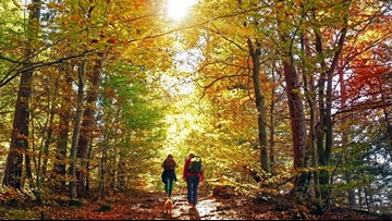 Where to find the best fall foliage in Minnesota