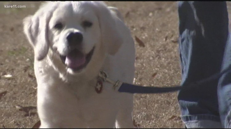 Helping your pets through 4th of July fireworks