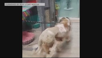 'Old Lady' the St. Bernard improving after 17 days in cold