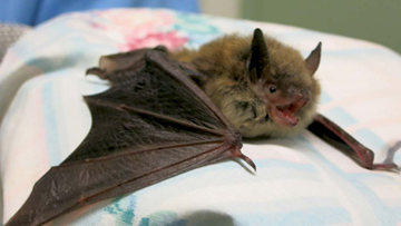 City issues warning after rabid bats found in Minneapolis