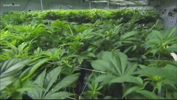 Lawmakers launch recreational marijuana bills